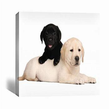Labrador puppies Wall Art Prints on Canvas - Wrapped on wood